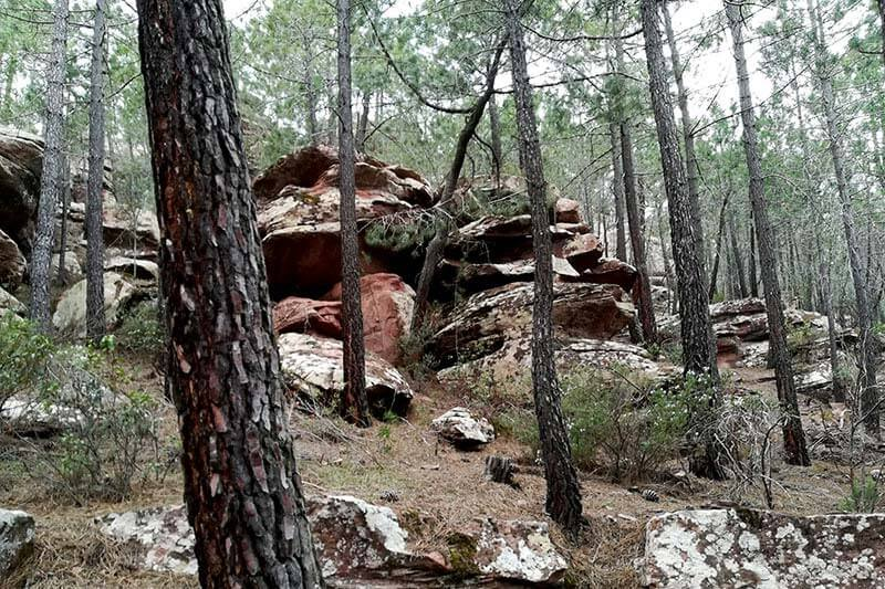 Pino rodeno y roca de rodeno