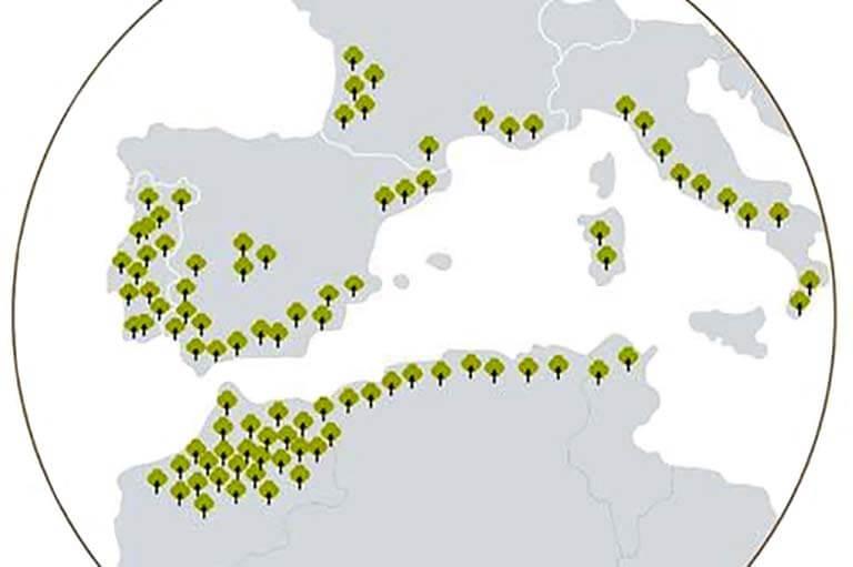 Mapa distribució mundial de l'alzina surera (Font APCOR)