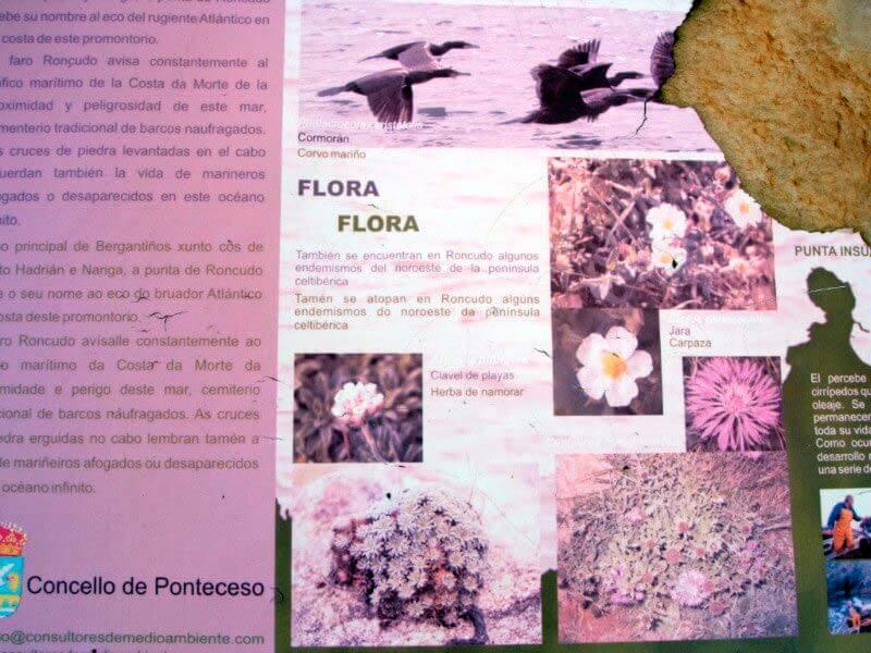 Punta Roncudo Cartel informativo