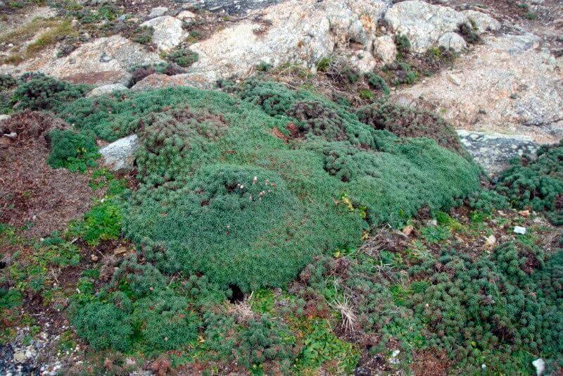 Punta Roncudo Flora endémica