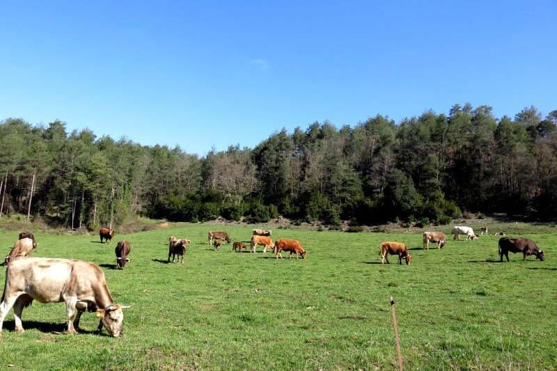 Pastures a la Riera de Merlès